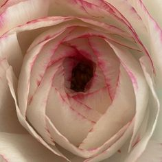 #チューリップ #ラナンキュラス だったはず笑 #flowerstagram  #花のある暮らし Rose, Illustration, Flowers, Plants, Pink, Roses, Illustrations, Flora, Royal Icing Flowers