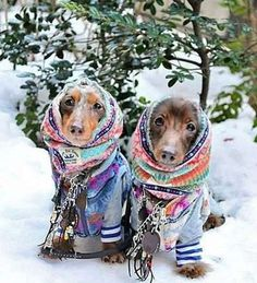 The bright colors make it easier to spot the small pups in the mounds of snow.Share this on Facebook... - Mom.me