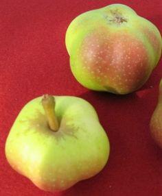Apfel sternapi