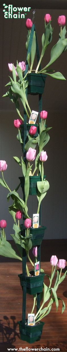 a tulip flower chain... very nice