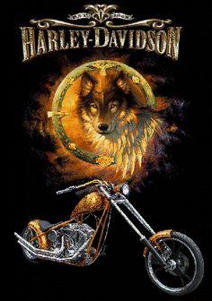Motards - Loup, moto Harley-Davidson