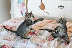 21 Cool Cat Facts To Share With Kids. Introducing kids to pets is a useful and important way to teach them to respect animals. Here are 21 interesting cat..