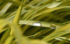 Blumeninsel Mainau - Bodensee - Süddeutschland   Mehr Fotos in meiner Blog-Gallery auf www.kuechencottage.de #fotografie #blumen #flowers #flora #hobbyfotografie #fotos #wunderschön #traumhaft #Bodensee #see #blumeninsel #mainau #Badenwürttemberg #pflanzenwelt #blumenwelt #pflanzen #natur #magisch