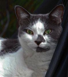 Feline   Kitten, Kitty, Puss, Tabby, Cat, Domesticed Cat, Domestic, Tomcat, Cougar, Mouserm, Bobcat, Jaguar, Cougar, Panther, Puma Before Us, Jaguar, Panther, Kitten, Friends, Cats, Animals, Character, Amigos