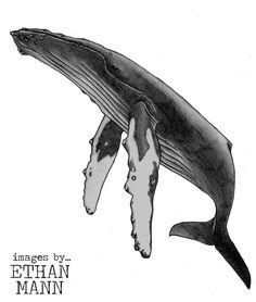 Humpback Whale Tattoo Design by ~emann14 on deviantART