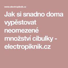 Jak si snadno doma vypěstovat neomezené množství cibulky - electropiknik.cz