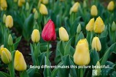 Being different makes this picture beautifull...