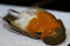 More dead bird...