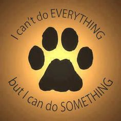 Adopt, foster, donate, volunteer, share!