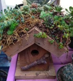Succulent roof-top garden on birdhouse  https://www.facebook.com/mancuspias