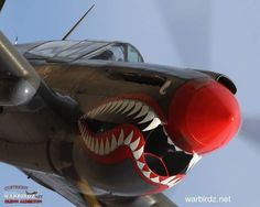 This is a really good looking P-40