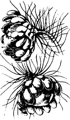 protea Drawings, Painting, Art, Draw, Prints