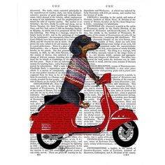 Asstd National Brand #dachshund on a MopedCanvas Wall Art