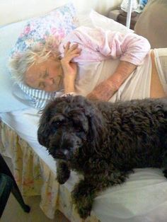30 Best Therapy Dogs images | Therapy dogs, Dogs, Therapy
