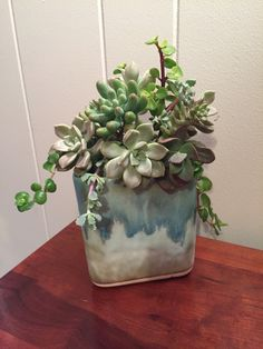 "Succulents in McCarty pottery ""Delta Vase"" from Mississippi"