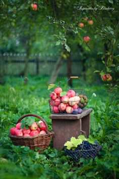 gathering.  It's not all about the yellows & oranges you know!  Apple season too.