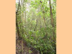Costa Rica, Plants, Flora, Plant