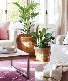 Plantas de interior en salón