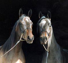 Slängsboda Arabians