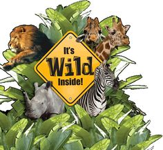 152 Best Zoo S Images On Pinterest The Zoo Zoos And Green Bay