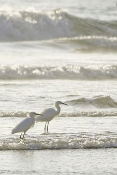 Sea birds at the ocean I Love The Beach, Tier Fotos, Am Meer, Shades Of White, White Aesthetic, Belle Photo, Beautiful Birds, Beautiful Pictures, Scenery