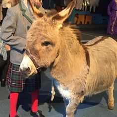 Children upstaged at the #nativity  Only at our school would you get live donkeys...    #embracetheseasons #writemorelivemore #happinessproject  #happier2017