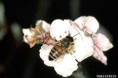 Why do we have fewer honeybees these days? What caused the decline? What can we do to help? These questions and more will be answered. Kill Fire Ants, Plant Pathology, Hope For The Future, Bees, Butterflies, This Or That Questions, Professor, Tennessee, Flowers