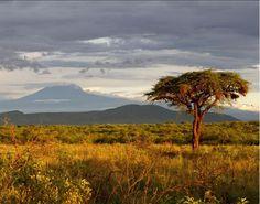 Gorgeous view of Southern Kenya, looking toward Mount Kilimanjaro! #Travel