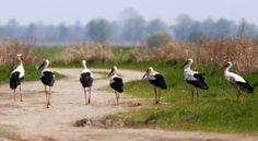 Biebrzański Park Narodowy-Poland
