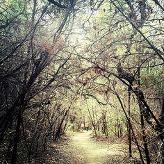 #austin #greenbelt #hiking #trail