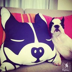 French Bulldog // Boston Terrier Pillow by PopDogStore on Etsy, $48.00