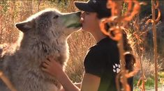 Therapy Wolves Become Guides for Troubled Teens (WATCH)