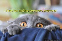 Котоматрица: - Ужас как люблю смотреть ужастики!