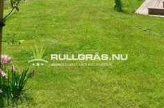 Denna gräsmatta såldes med rullgräsduk 16 oktober 2018 och någon vecka senare blev det vinter och snö. Så här på bilden såg gräsmattan ut i maj 2019. 🌱🌱🌱Med rullgräsduk kan du plantera gräsmatta året runt!! Maj, Outdoor Decor, October