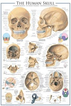 - Each poster features a unique design or picture - A wide variety of themes to choose from - Scientific posters, animal posters, and even technological posters - Extremely detailed with information a
