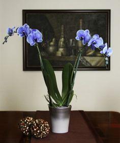 1000 Images About Mystique Orchids On Pinterest Orchids