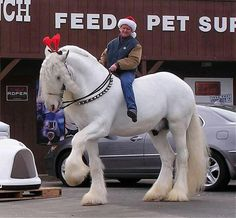 A giant white Friesian cross. My dream horse is a Friesian. Big Horses, Work Horses, Horse Love, Horse Girl, All The Pretty Horses, Beautiful Horses, Animals Beautiful, Clydesdale Horses, Friesian Horse
