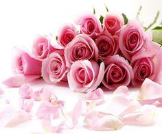 Rose♥