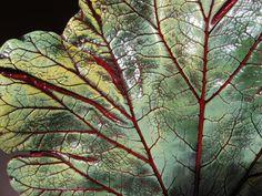 Concrete Rhubarb Leaf Casting
