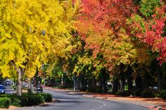 Chico, California- City of Trees. A piece of my heart will always be in this town. Chico California, California Style, Great Places, Places To Go, Beautiful Places, Chico State, South Korea Travel, Chicago Tribune, Amazing Nature