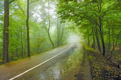 جاده های بارانی