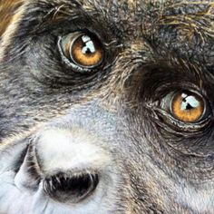 Orangutan drawing in coloured pencil. I'm just blown away these pencil drawings are so real & beautiful!