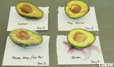 Who'da thought?  How to stop an avocado from browning. slice it in half, leave the stone in the one to be stored, and then place it in an airtight container with some large chunks of red onion.