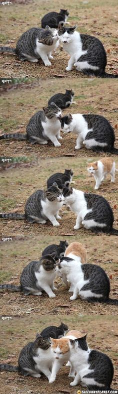 Jealous Cat Is Jealous  -  http://thefunnyplanet.com/pic/2225