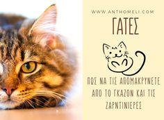 Πως να απομακρύνουμε τις γάτες από το γκαζόν και τις ζαρντινιέρες Cats, Books, Animals, Gatos, Libros, Animales, Animaux, Book, Animal