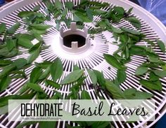 Dehydrate basil leaves at 95º until crisp | PreparednessMama