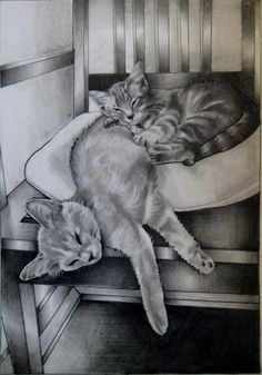 Two cats. Pencil and ink on paper. 2013. Rose Slaton.