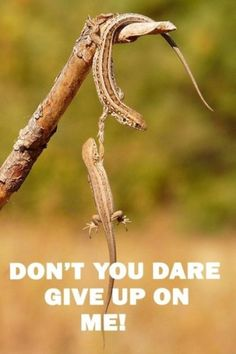 Don't you dare give up on me!