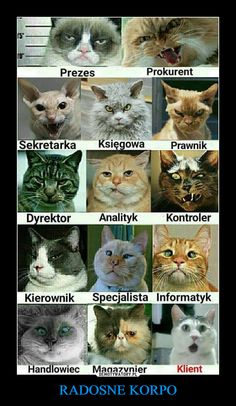 RADOSNE KORPO – Happy Animals, Animals And Pets, Funny Animals, Wtf Funny, Funny Cats, Hilarious, Cat Memes, Funny Memes, Pokemon