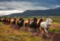 Horses on the march